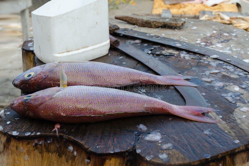 Świeżej ryby Threadfin lub czerwonego snappera leszcz przed gotować na tnącym stole zdjęcie royalty free