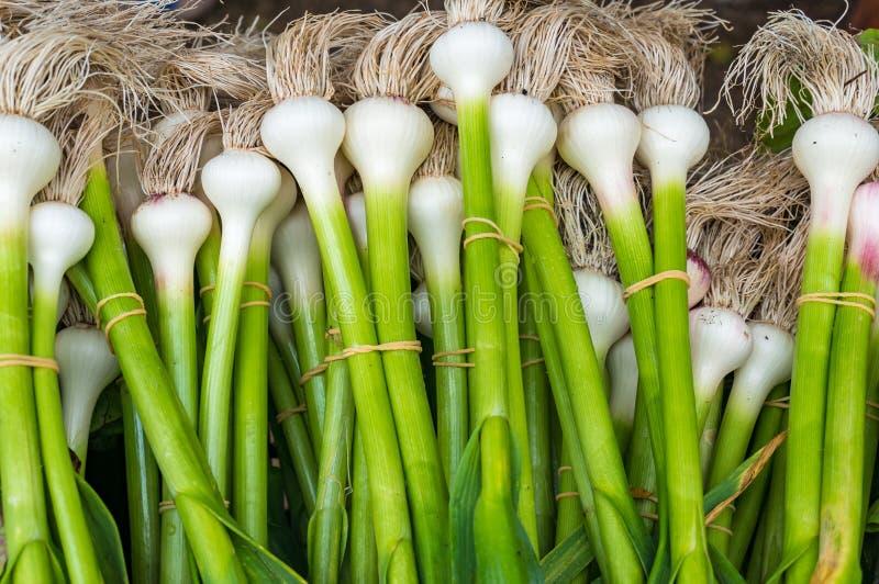 Świeżej wiosny cebulkowy plik na rolnika rynku zdjęcie stock