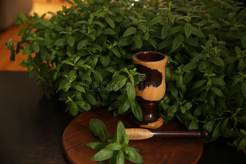 Świeżej zieleni mennicy organicznie liście w krzaku z moździerzem i tłuczkiem obrazy stock