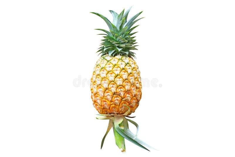 Świeżość ananas odizolowywający na białym tle obrazy stock