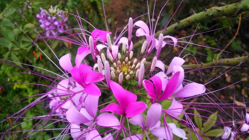 Świeżość natura zdjęcie stock