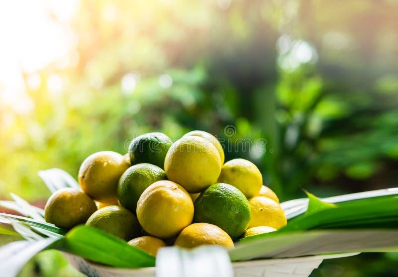 Świeżo dojrzałe cytryny podnosić, wiele cytryny w koszu fotografia royalty free
