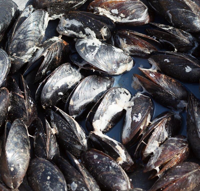 Świeżo gotujący mokrzy mussels na dennym wybrzeżu obrazy royalty free