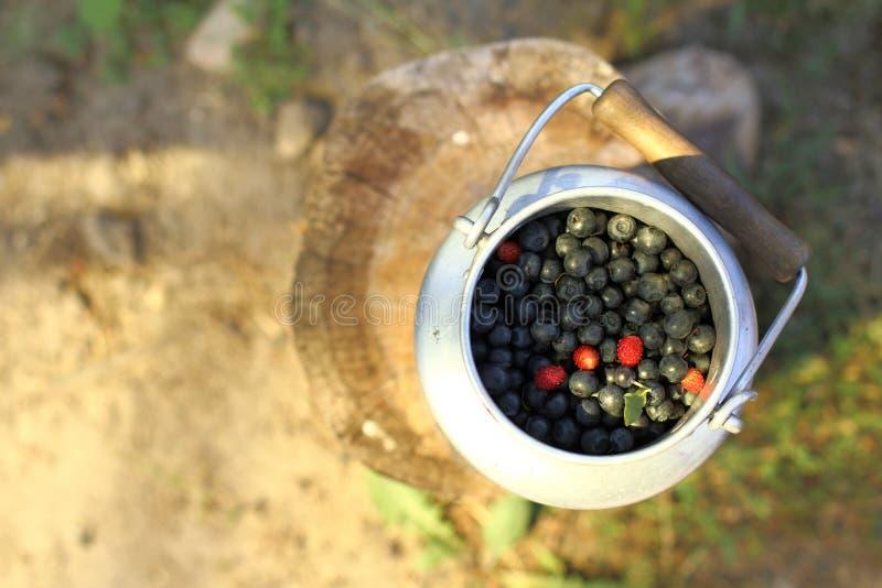 Świeżo Lasowe jagody fotografia stock