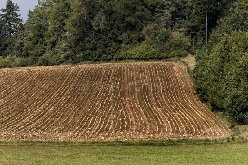 Świeżo siający pole w lasowym wzgórzu obraz stock