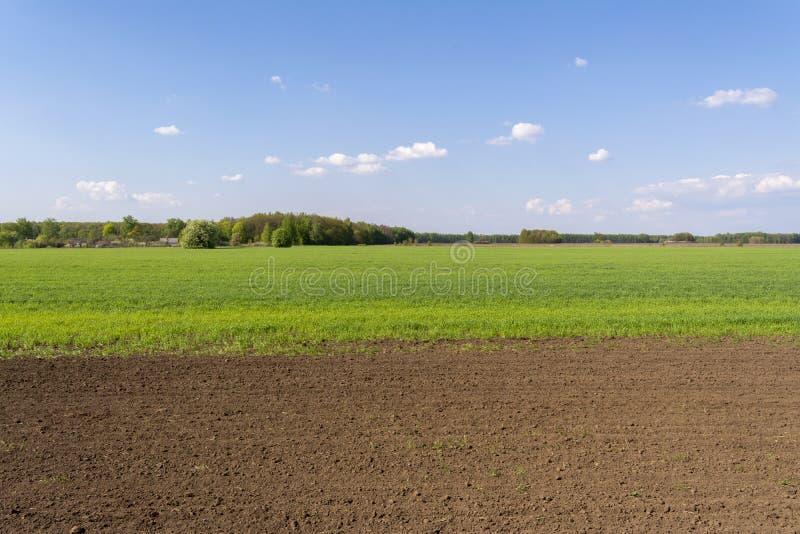 Świeżo siający pole z młodymi flancami uprawy obrazy stock