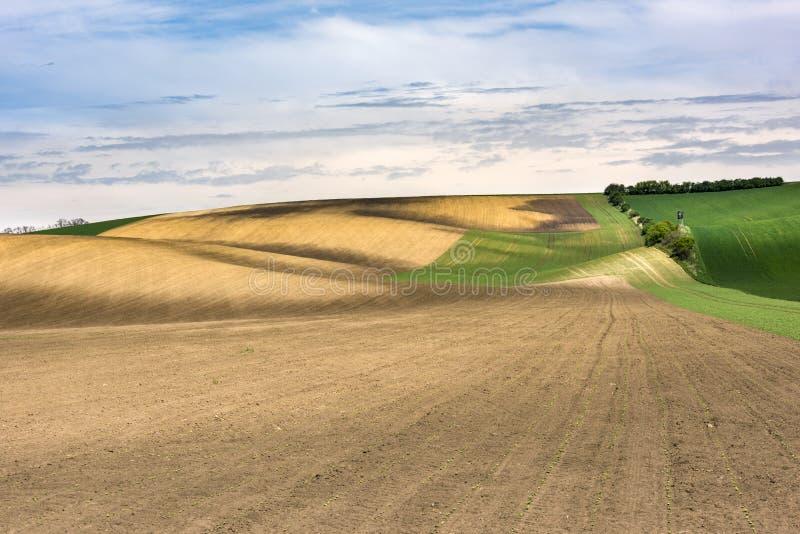 Świeżo siający rolnictwo mlejący z falistymi łąkami obraz stock