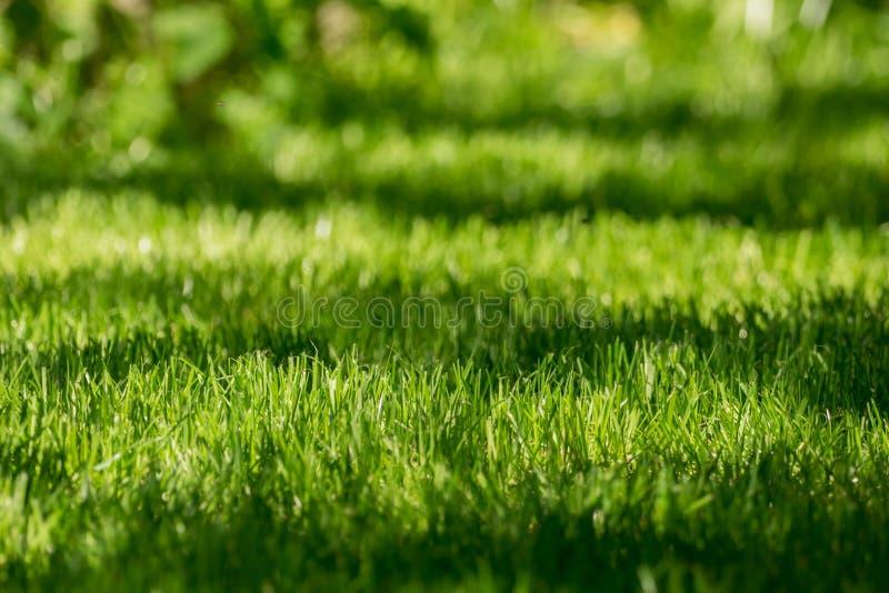 Świeżo skoszony gazon w świetle słonecznym obrazy royalty free