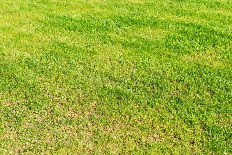 Świeżo skoszony gazon w ogródzie zdjęcie royalty free