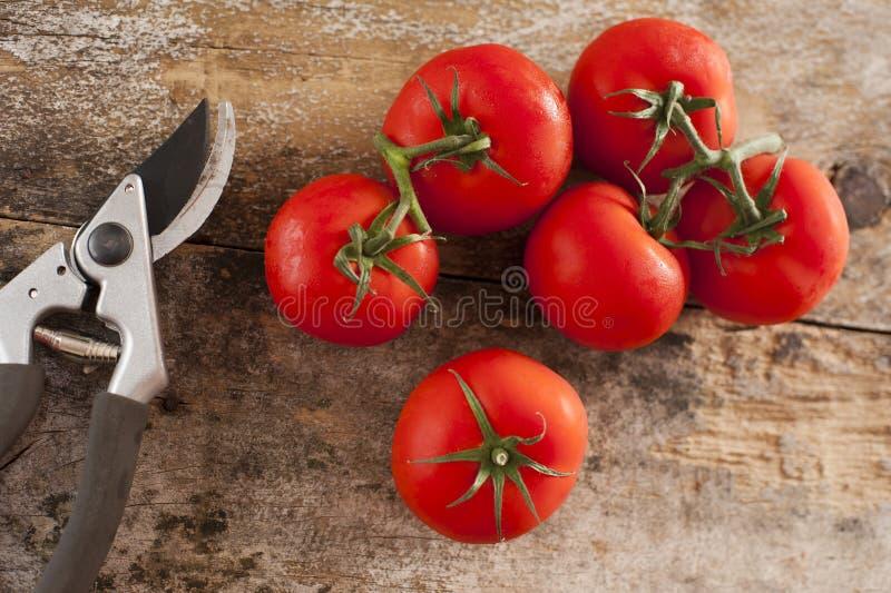 Świeżo ukradzeni pomidory z winogradu zdjęcia stock