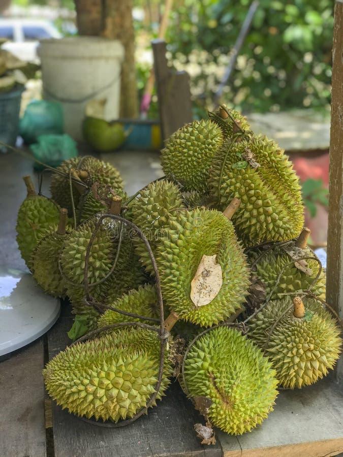 Świeżo ukradziona durian owoc od lokalnego sadu w Malezja Azjata rozważał durians jako egzotyczna owoc przez swój cukierki obrazy stock