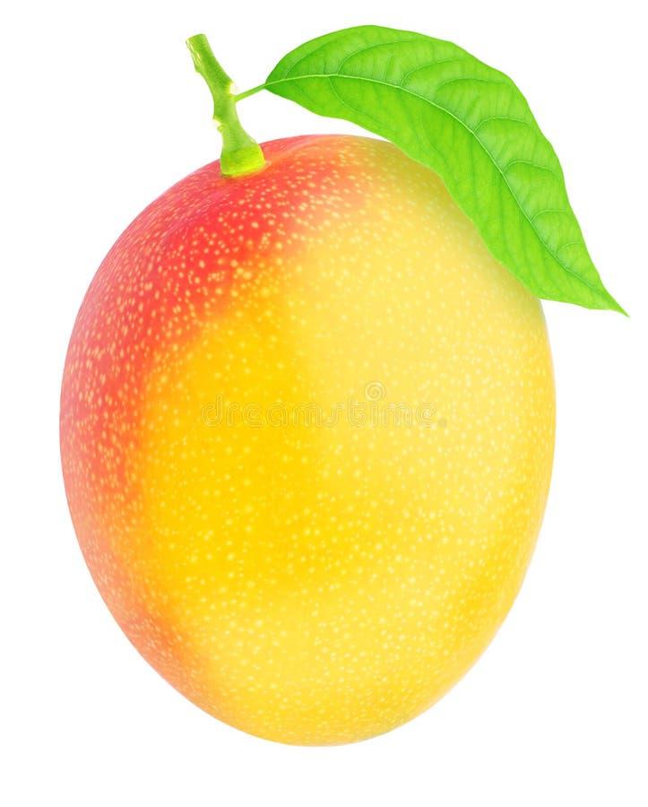Świeżo ukradziony pojedynczy mango z zielonym liściem zdjęcia royalty free