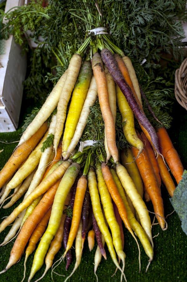 Świeżo zbierane marchewki z tęczy obrazy royalty free