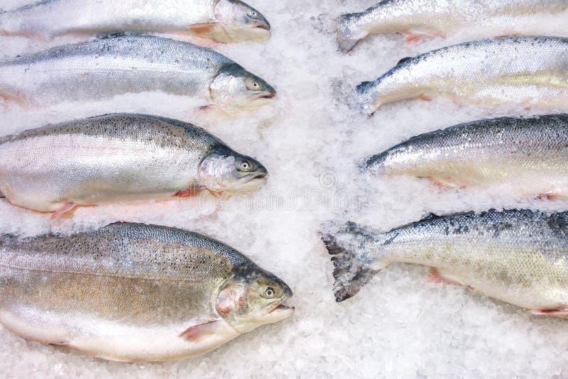 Świeży łosoś norweski na lodzie w supermarkecie zdjęcie royalty free