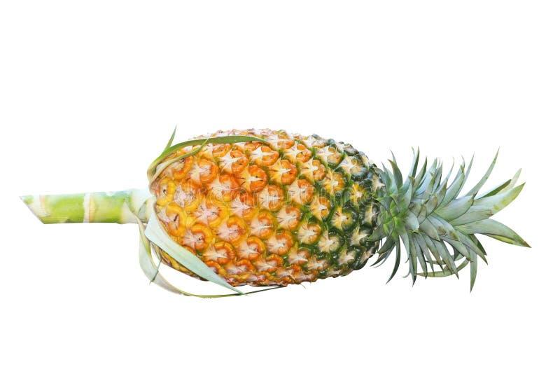 Świeży ananas odizolowywający, Asia obraz royalty free