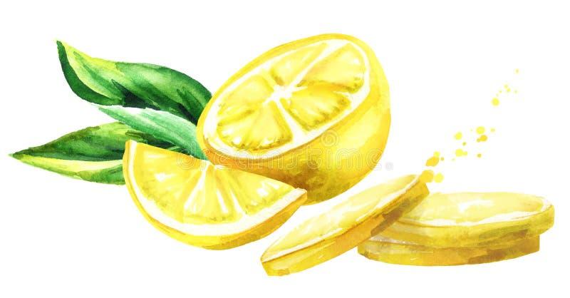 Świeży cytryn owoc skład Akwareli ręka rysująca ilustracja royalty ilustracja