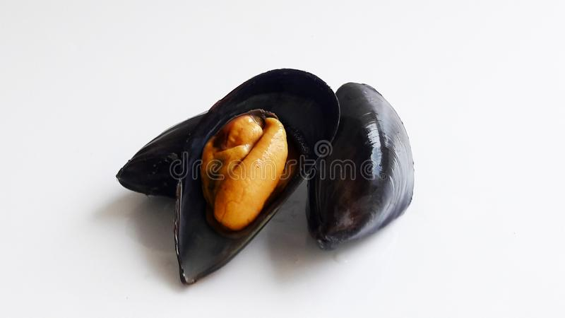 Świeży czarny mussel na bielu fotografia stock