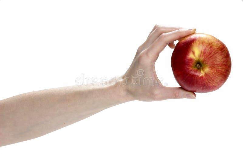 Świeży czerwony jabłko w pięknej ręce odizolowywającej na białym tle. obraz royalty free