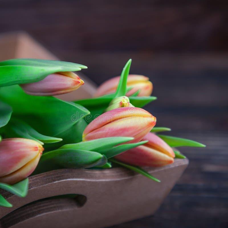 Świeży delikatny czerwony kolor żółty kwitnie tulipany na ciemnym drewnianym tle fotografia royalty free