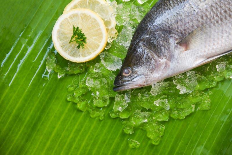 Świeży dennego basu ryby dla gotować, owoce morza seabass rybiego talerza oceanu surowy smakosz na lodzie/ zdjęcia royalty free