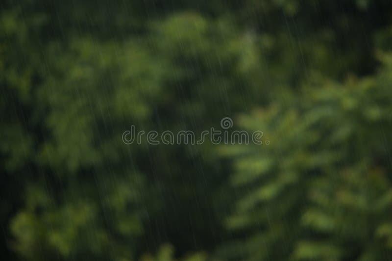 Świeży deszcz obraz stock