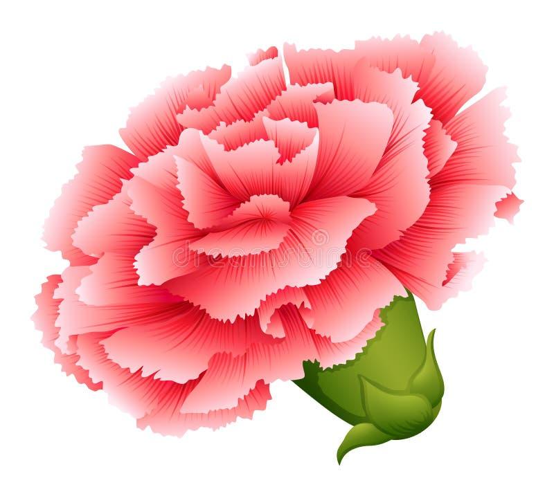 Świeży goździk menchii kwiat ilustracja wektor