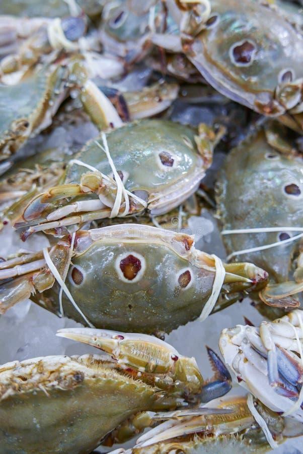 Świeży i surowy THREE-SPOT PŁYWACKI krab w owoce morza rynku zdjęcia royalty free