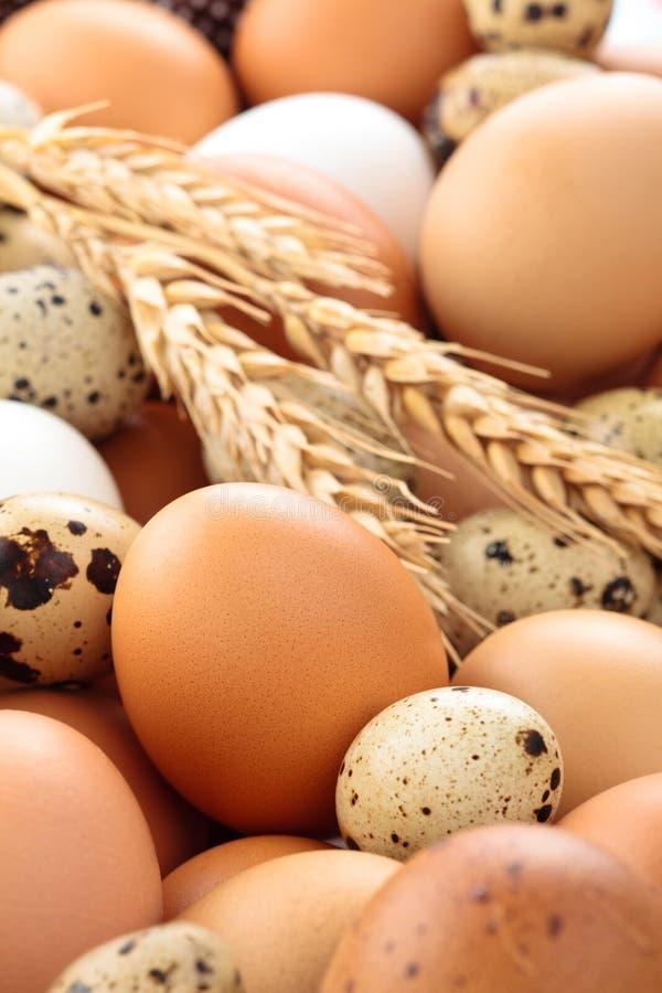 Świeży jajka tło fotografia stock