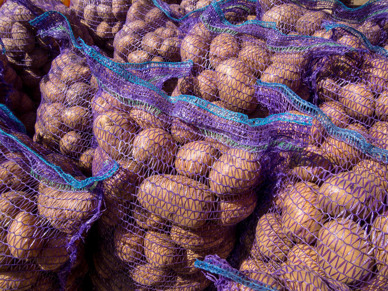Świeży kartoflany żniwo pakujący w siatkach zdjęcia royalty free