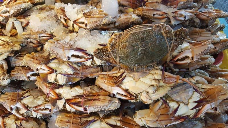 Świeży krab przy owoce morza rynkiem zdjęcia stock