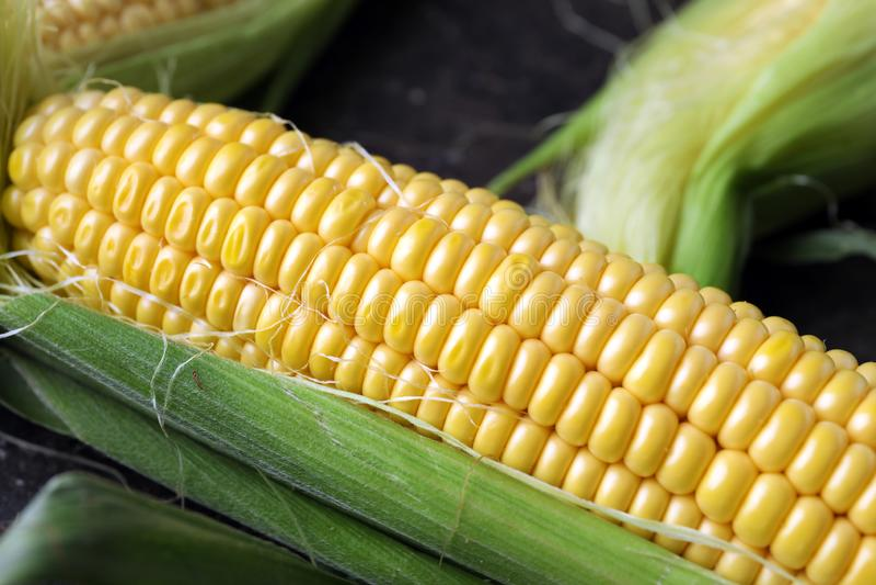 Świeży kukurydzany cob, zbliżenie obraz royalty free