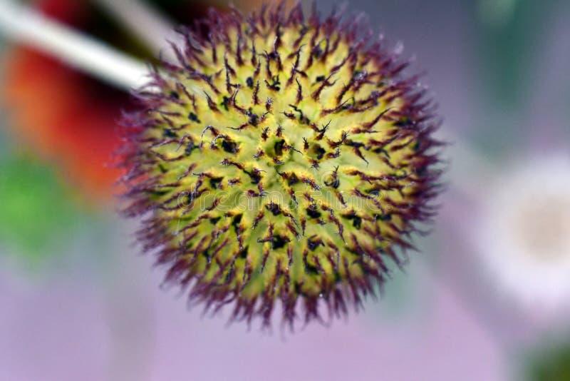 Świeży kwiat w ogrodowy Powabnym, colourful i obrazy royalty free