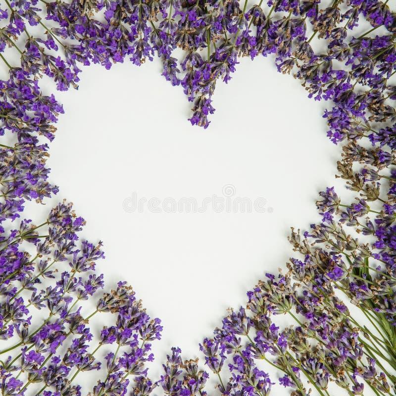 Świeży lawendowy serce odizolowywający na białym tle zdjęcie stock