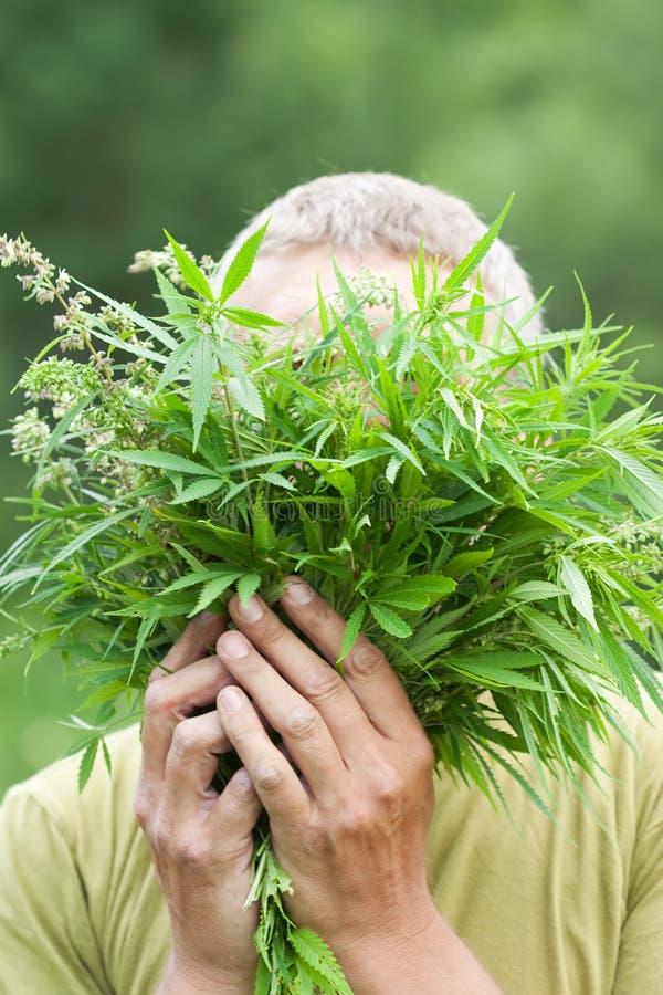 świeży marihuana mężczyzna zdjęcie stock