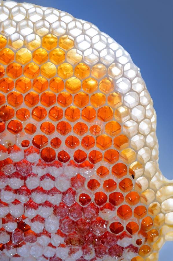Świeży miód w honeycombs zdjęcie royalty free