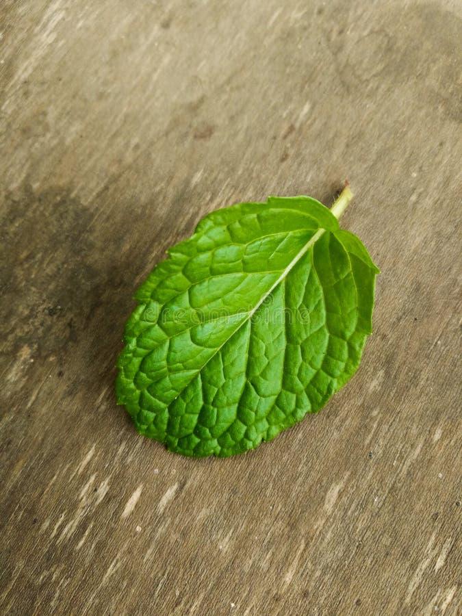 Świeży Miętowy liść obraz stock