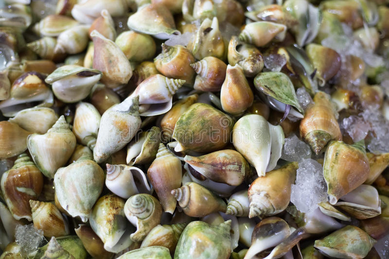Świeży milczków Shellfish owoce morza Świeży rynek zdjęcia royalty free