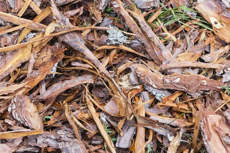 Świeży mokry drewniany układ scalony od sosny, tekstury tło obrazy stock