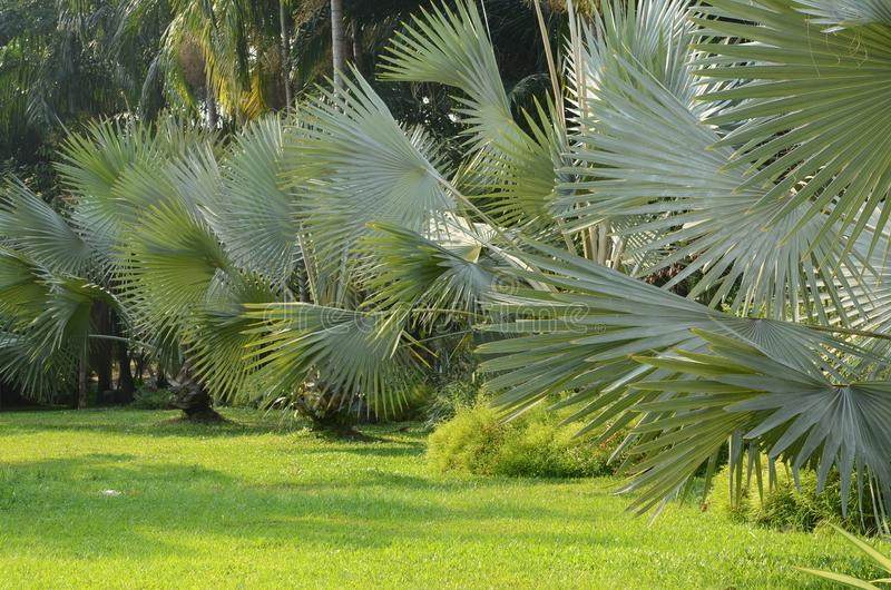 Świeży naturalny park z drzewkami palmowymi dekorującymi zdjęcia stock