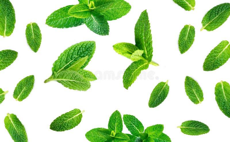 Świeży nowych liści wzór odizolowywający na białym tle, odgórny widok obrazy stock