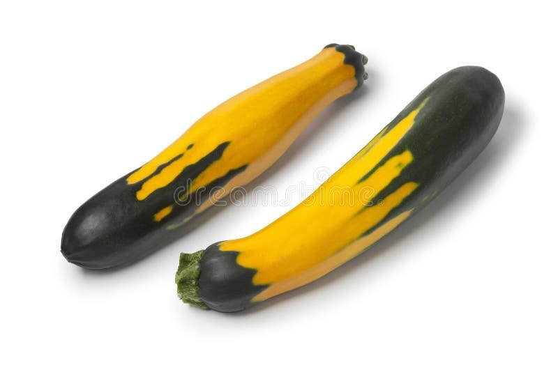 Świeży pasiasty zucchini zdjęcia stock