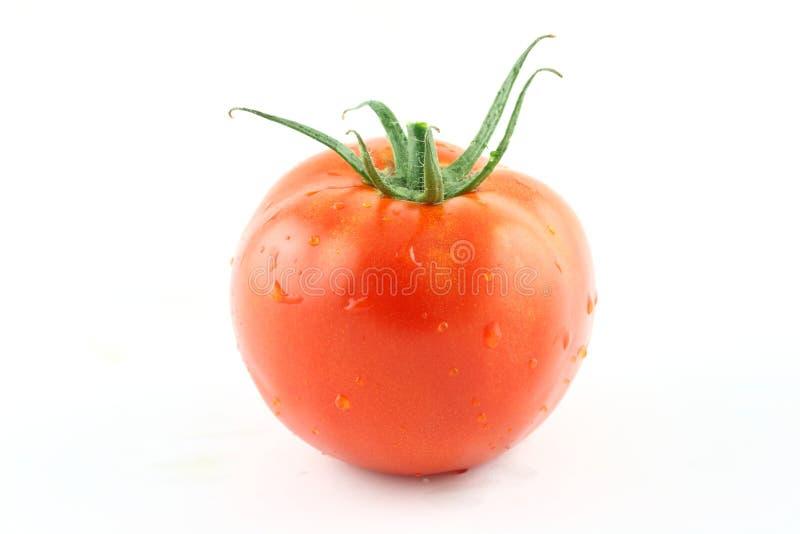 świeży pomidor obrazy stock