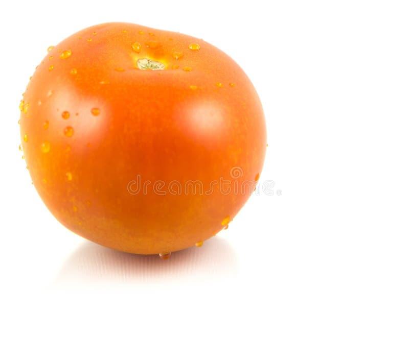 Świeży pomidor II obraz stock