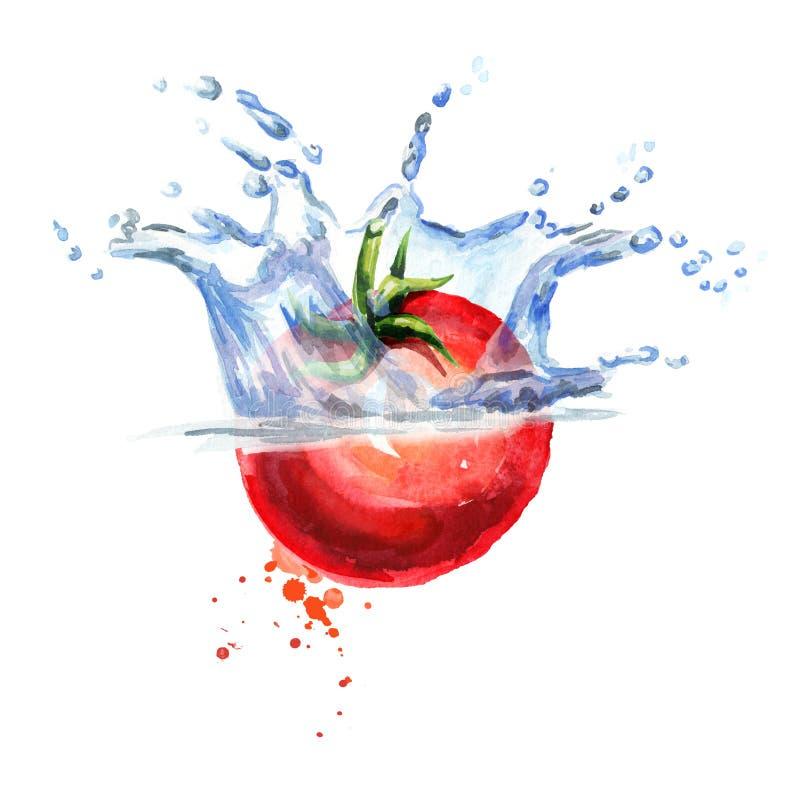 Świeży pomidorowy spadać w wodę odizolowywającą na białym tle Akwareli ręka rysująca ilustracja ilustracji