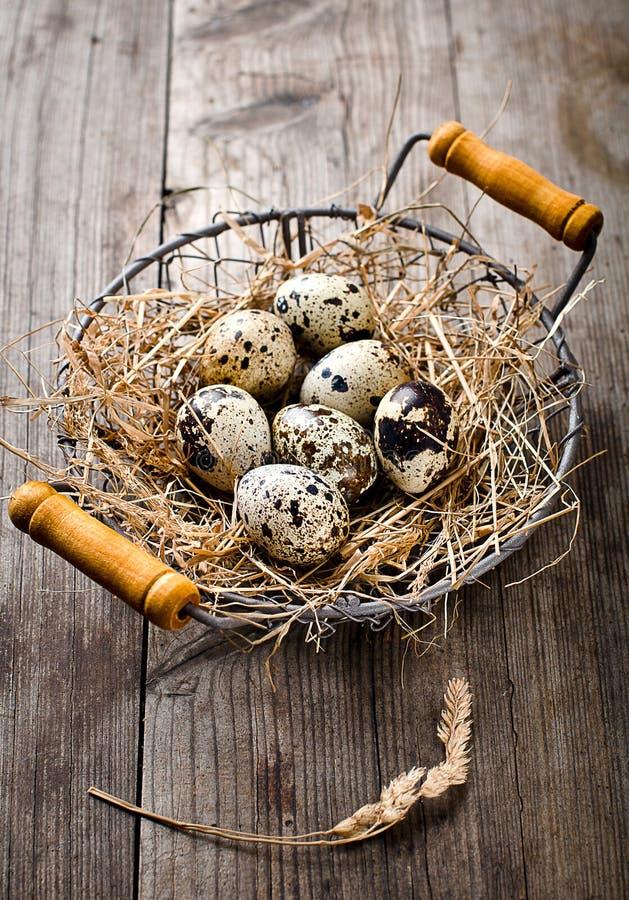 Świeży przepiórki jajko obrazy stock