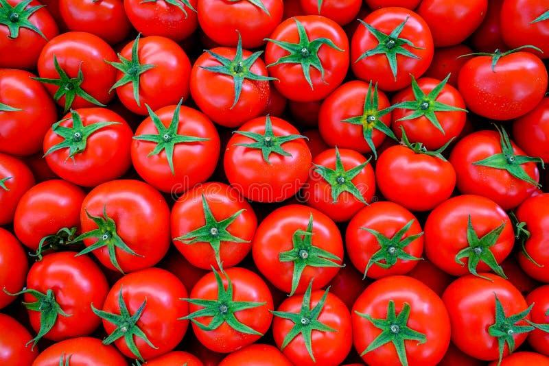 Świeży pulchny pomidorowy tło fotografia royalty free
