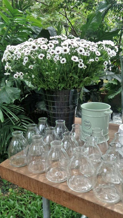 Świeży rżnięty biały kwiat w blaszanym wiadrze i linii jasne szklane wazy obraz royalty free