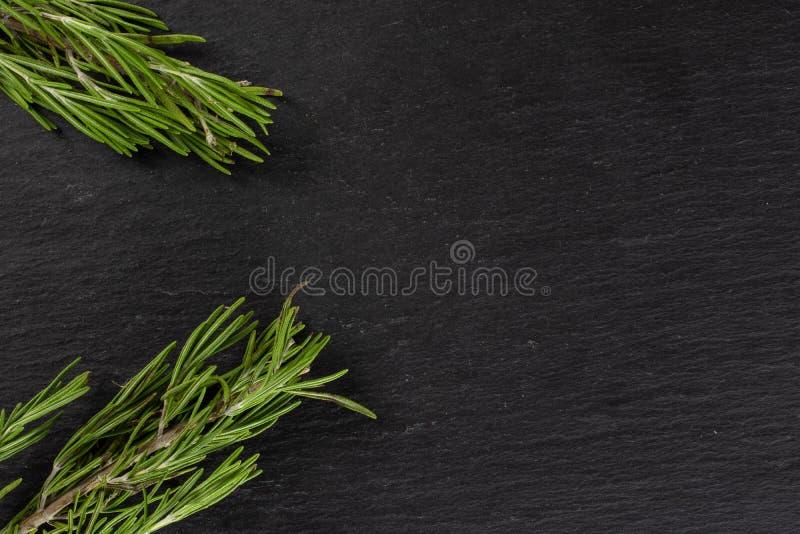 Świeży rozmarynowy ziele na popielatym kamieniu zdjęcie stock