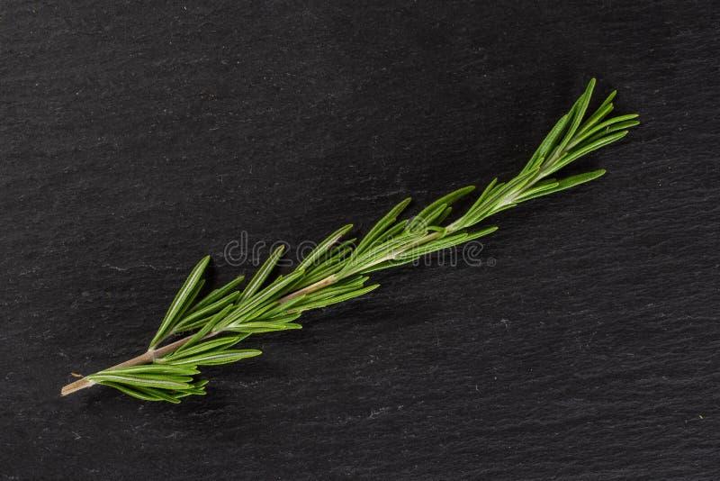 Świeży rozmarynowy ziele na popielatym kamieniu obraz royalty free