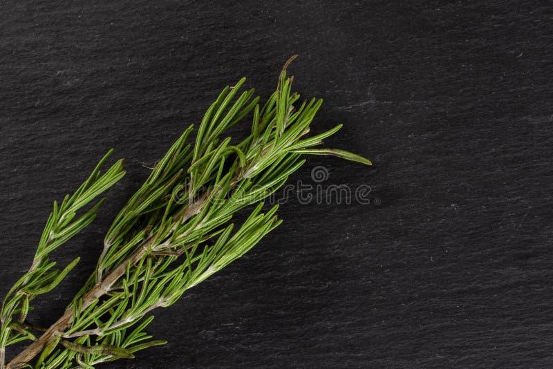 Świeży rozmarynowy ziele na popielatym kamieniu fotografia stock